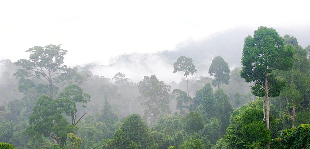 DL Rain Forest Resource