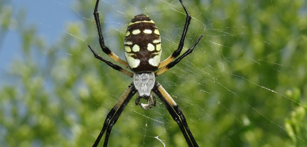 DL Spider Resource